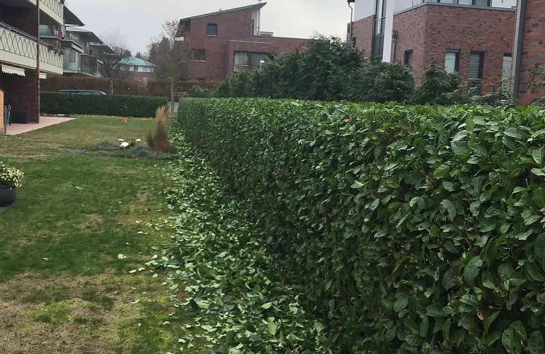016_  Gartengestaltung & Pflege  Rasen & Bepflanzung  Baumfällung & Heckschnitt  Naturstein & Pflasterarbeiten  Wässern von Blumen, Sträucher und Bäume  Bewässern, schneiden und düngen des Rasens  Entsorgen des Grünschnitts  Zurück-schneiden von überstehendem Gehölz